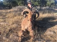 Aoudad Hunts with professional hunting guide Dan Moody Hunting Services in Texas