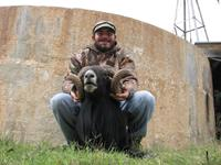 Black Hawaiian Hunts with professional hunting guide Dan Moody Hunting Services in Texas