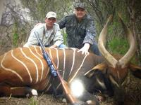 Bongo Hunts with professional hunting guide Dan Moody Hunting Services in Texas