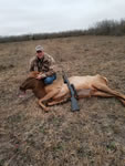 Elk Hunts with professional hunting guide Dan Moody Hunting Services in Texas
