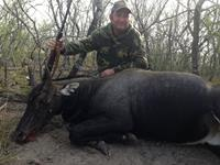 Nilgai Hunts with professional hunting guide Dan Moody Hunting Services in Texas