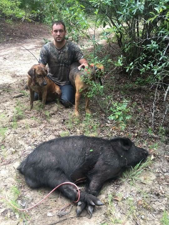 Hogs Dogs For Sale In Texas