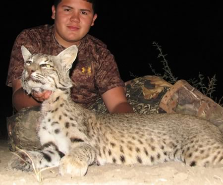bobcat hunt in Texas