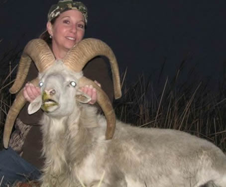 four horned sheep hunt in Texas