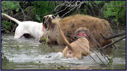 Texas dog breeders license cost dogs breed for Texas fishing license cost